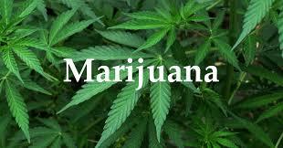 marijuana's health effects